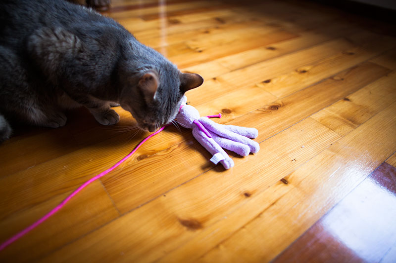 cat-with-kong-hugga-wubba-chew-toy