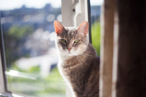 apartment-cat-floor-to-ceiling-cat-tree-options