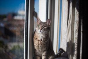 cat-in-sunny-apartment-window-flat-kitties