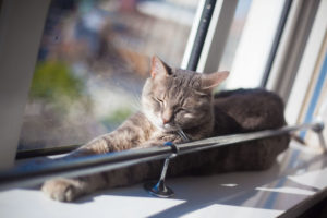 cat-sleeping-in-sunny-apartment-window