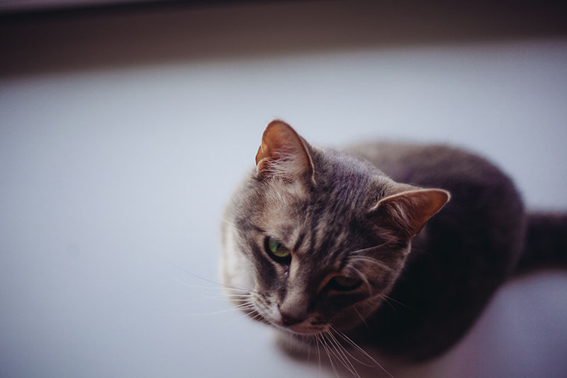 guide-to-training-cats-to-stay-off-kitchen-counters