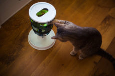 Hunting for the Best (Dry/Wet) Food for Your Indoor Cat? 18 Popular Options