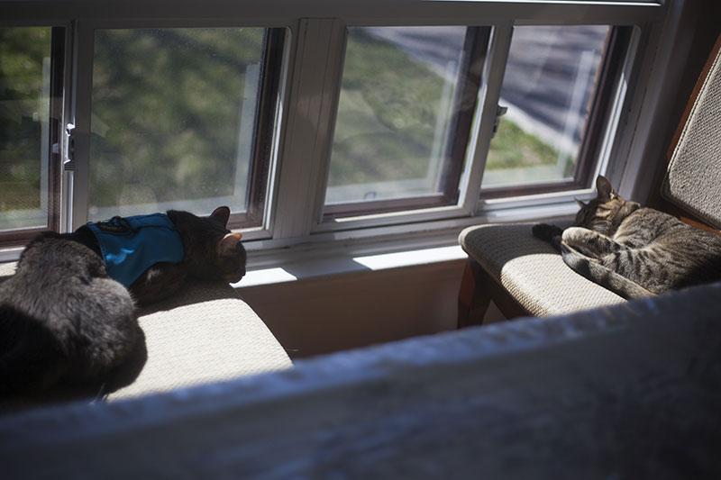 cats-sleeping-together-in-the-sun