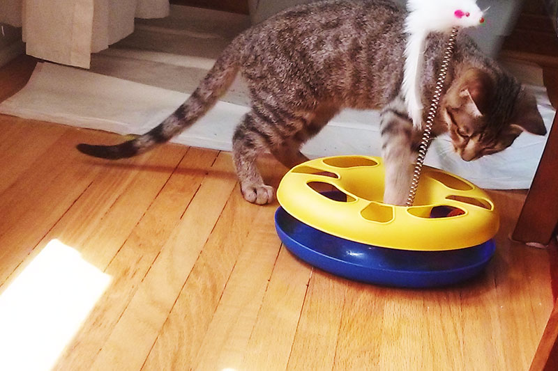home-alone-cat-toys-for-kittens