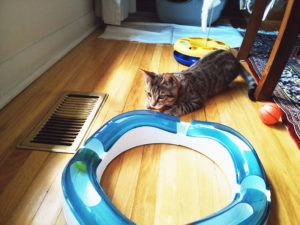 New Furbaby? Best Kitten Toys for Releasing That Unlimited Energy!