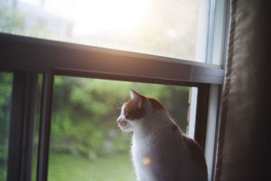 house-cat-sitting-by-window