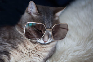 cool-cat-names-for-kickass-cats