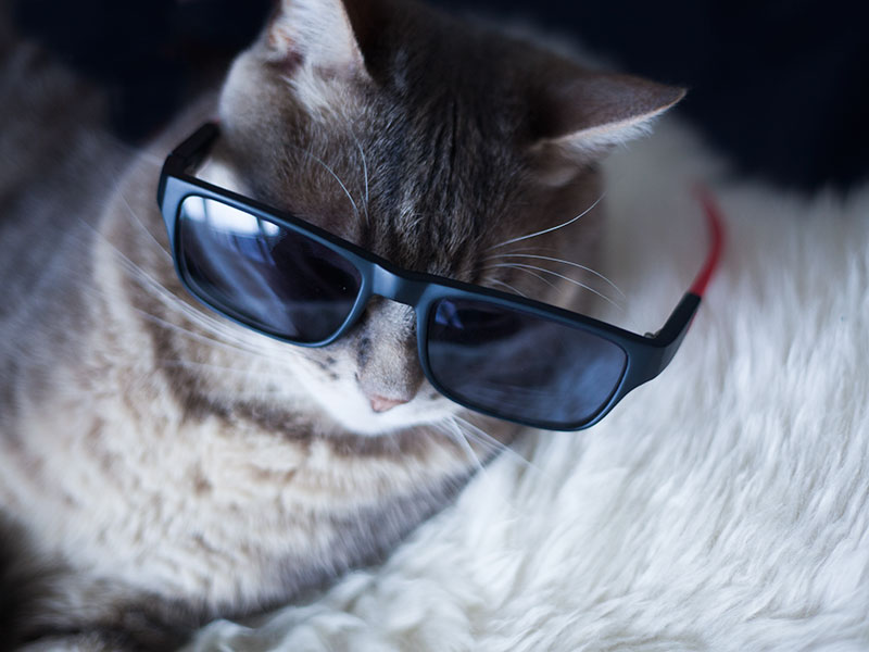pet-names-for-cool-cats-sunglasses-on-kitty