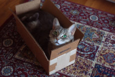 Kitties + Boxes? A Match Made in Heaven: Cat Toy Boxes & Cubed Cat Things