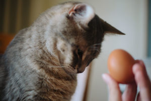 Can Cats Eat Eggs & Egg Yolks? Left Raw? Cooked Scrambled? Hard Boiled?