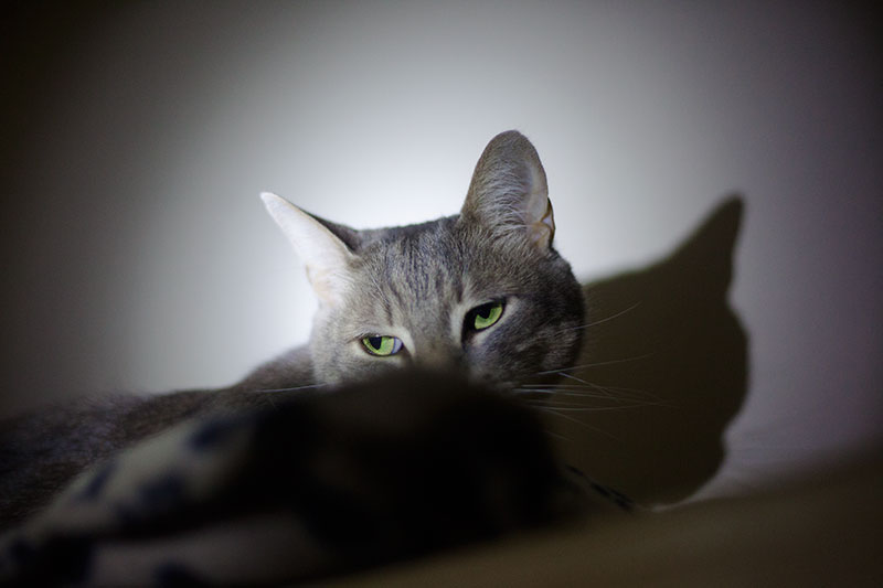 are-house-cats-nocturnal-do-cats-change-sleep-patterns