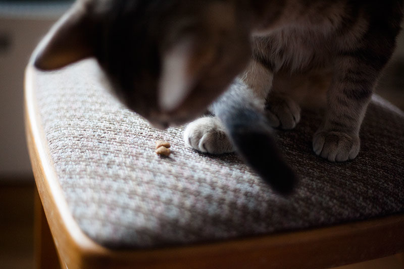 Feline Digestive Issues Sensitive Stomach Cat Foods Wet Dry You
