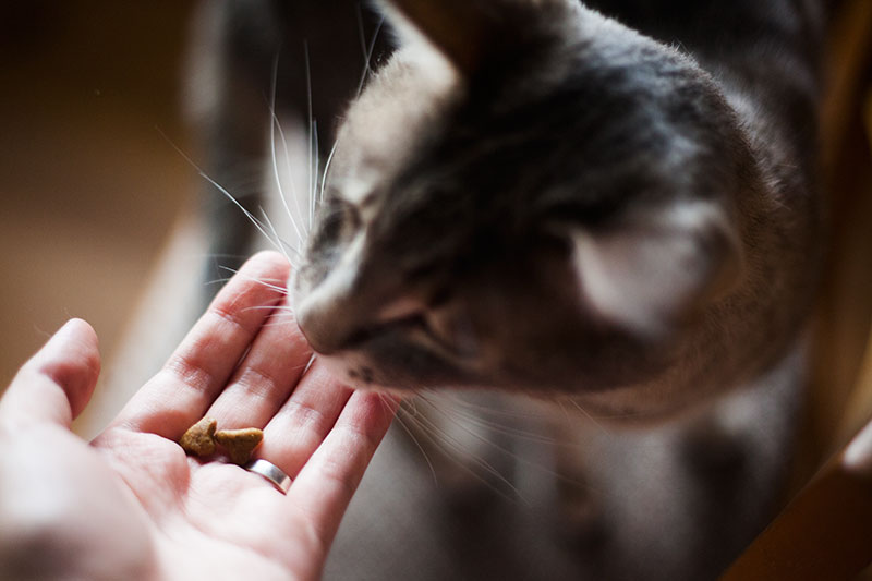 sensitive-stomach-food-for-cats-who-vomit-due-to-digestive-issues
