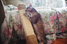 Save Your Sofa! How to Keep Cats from Scratching Leather Furniture
