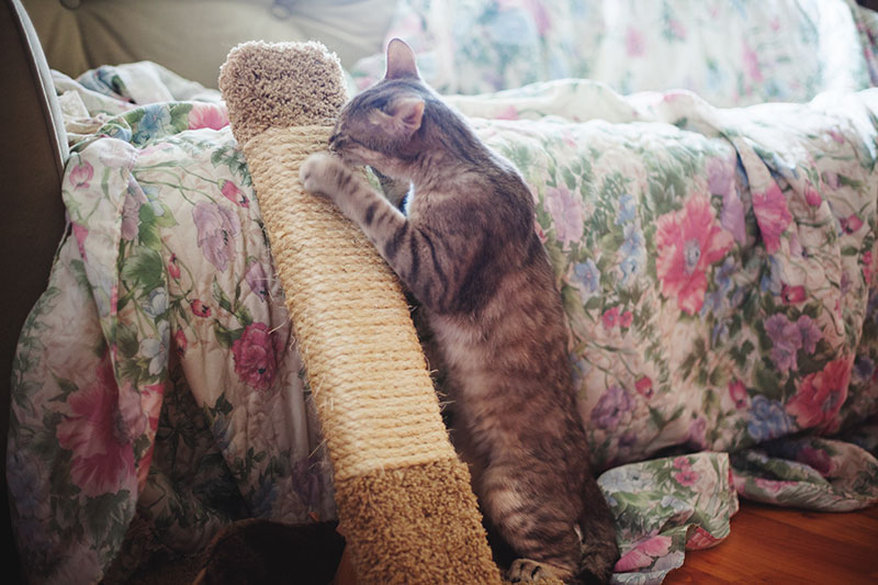 cat-scratching-on-wood-scratch-post