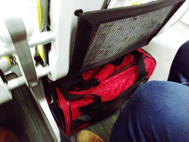 cat-in-plane-cabin-under-pet-owners-seat