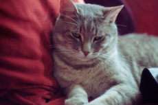 My Cat Got Sick; He's Better, but His Behaviour & Personality Changed: Help?