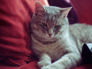 cat-not-the-same-after-illness-personality-behaviour-change