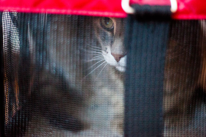 outdoor-cat-tents-and-tunnels-for-indoor-cats