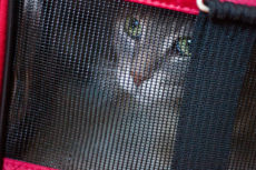 Outdoor Cat Tents & Tunnels for Taking Indoor Cats on Field Trips Outside