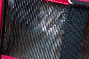 take-indoor-cats-outside-outdoor-cat-tents-tunnels