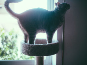 Enrich Indoor Cat Life on a Budget: Inexpensive Cat Trees (Big & Small)