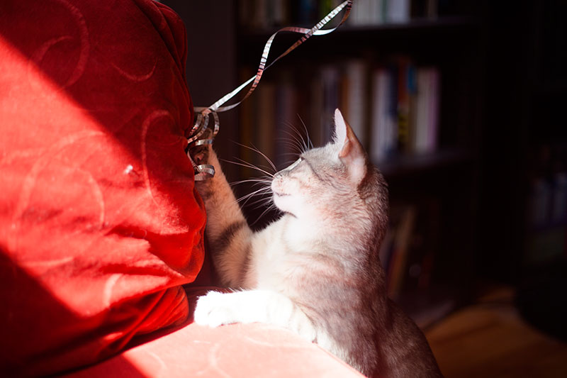 couch-protector-covers-for-cat-owners-scratch-proof