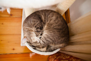 cat-sleeping-in-circle-cat-tree-happy
