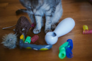 How Much Play Do Cats Need? How Often & How Long Should Playtime Be?