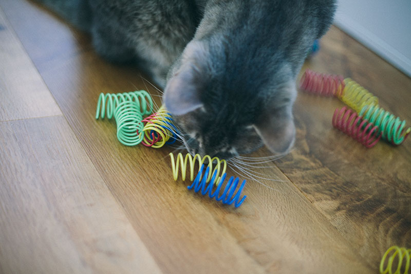 why-do-cats-like-chewing-on-plastic-is-it-dangerous