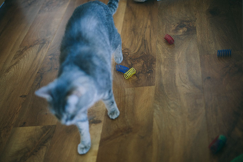 my-cat-likes-chewing-plastic-is-it-dangerous