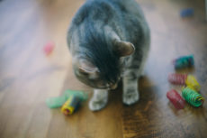 Why Do Cats Chew on Plastic? Is It Dangerous? Can I Get My Cat to Stop?