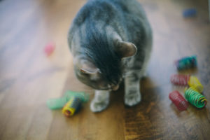 why-cats-chew-on-plastic