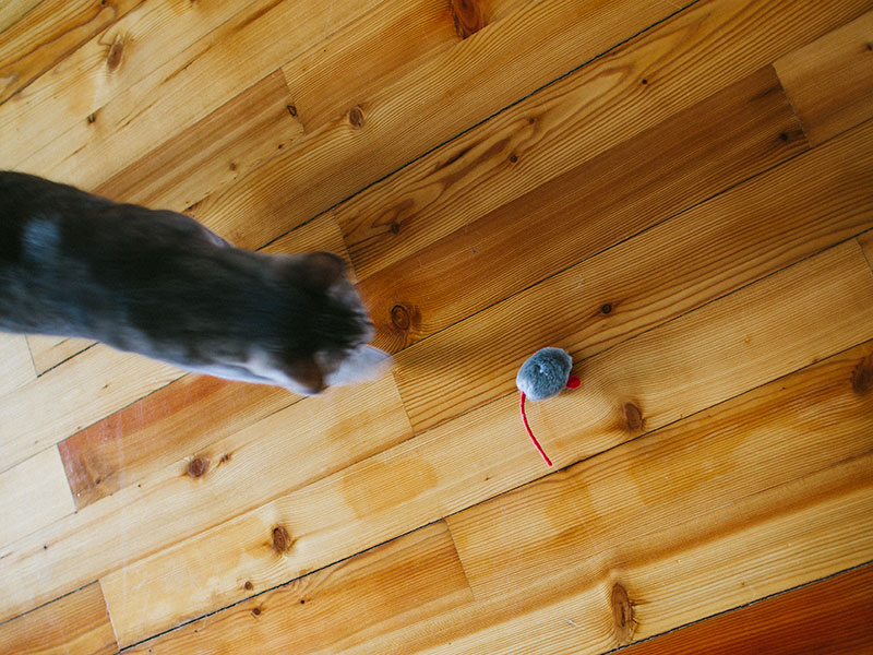 cat-chasing-toy-mouse-electronic-squeak-sound