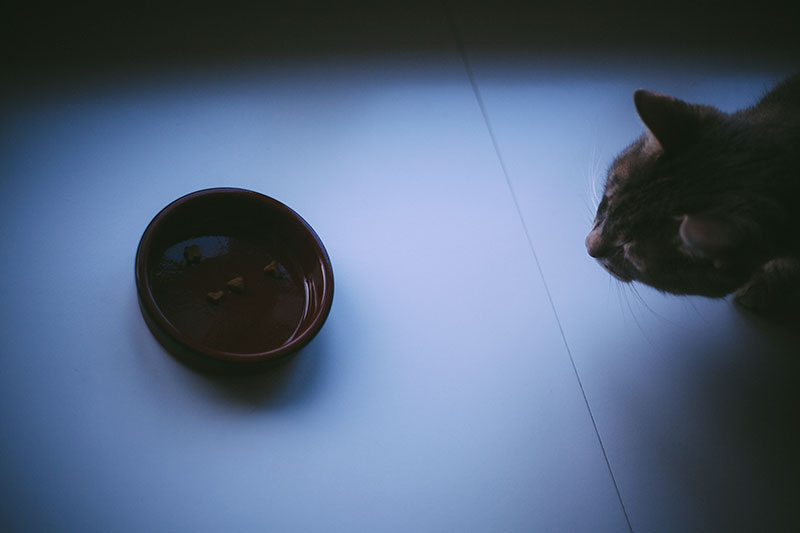 slow-feeder-bowls-for-cats-pet-bowls-for-fast-feline-eaters