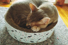 The Purrfect Low-Cost Scratch & Sleep Spots: Cardboard Cat Beds