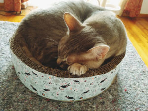 cute-kitty-sleeping-cardboard-cat-scratch-bed