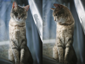 kitty-cat-by-window-blue-winter-portrait