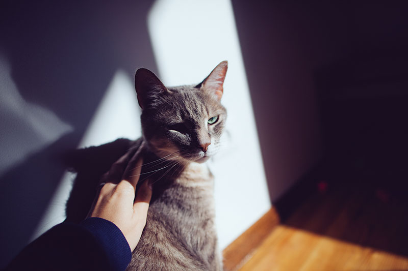 kitty-cat-being-pet-in-sunlight