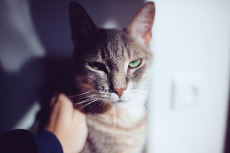 kittyclysm-cat-behaviour-article