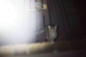 feral-cat-outdoors-coming-near-house