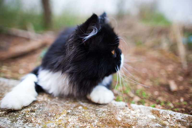 outdoor-cat-black-and-white-looking-around