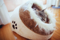 Self-Warming Cat Beds: So Cozy, Kitty May Never Want to Leave!