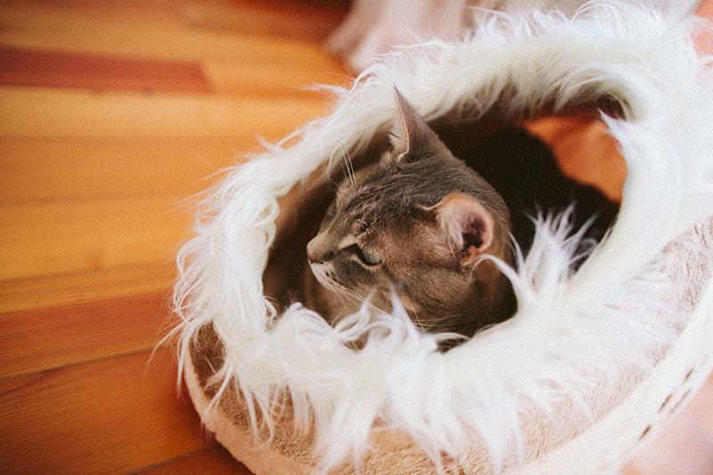 cat-sitting-in-bed-trixie-minou-cuddly-cave