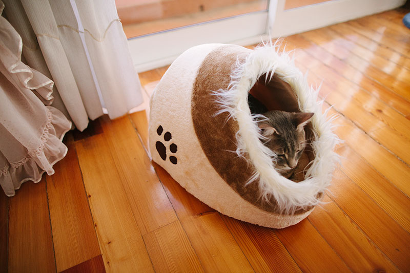 self warming cat beds