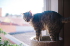 Sturdy, Durable, & Built to Last: Solid Wood Cat Trees, Big & Small