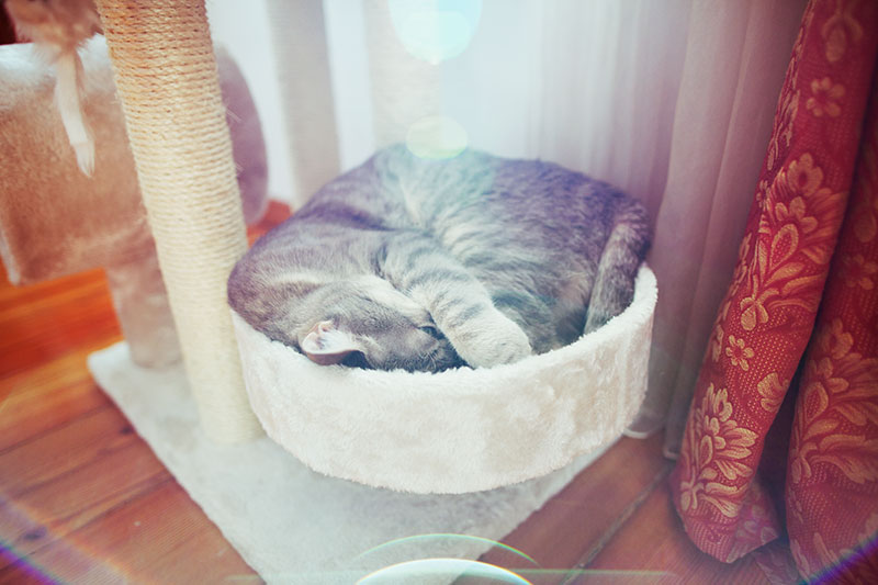 kitty-sleeping-in-wide-perch-cat-tree