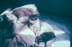 Waterproof Bed Covers for Pets: Nighttime Urine & Vomit Protection