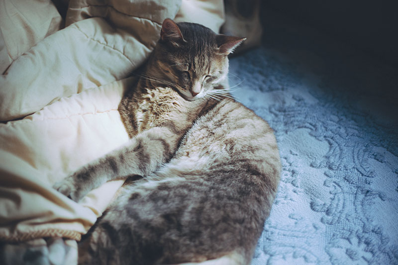 happy-cat-sleeping-on-bed