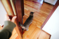 Close Indoor Doors, yet Grant Kitty Access? Easy Fix: Interior Cat Doors